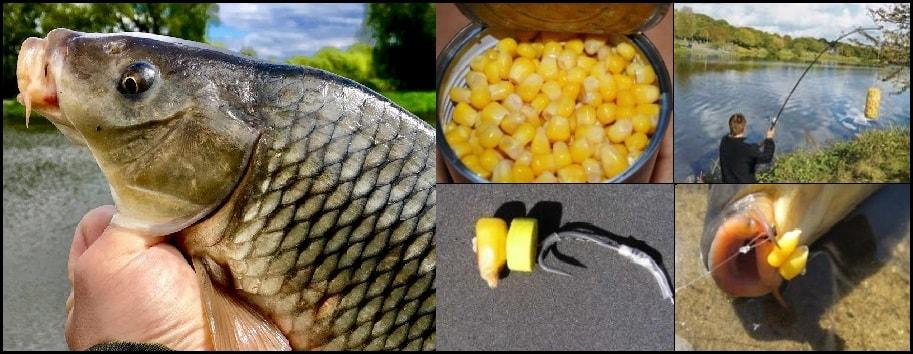 Ловля карпа на кукурузу, учимся правильно ловить 3 способами качестве приманки встала на первое