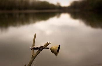 рыболовный колокольчик